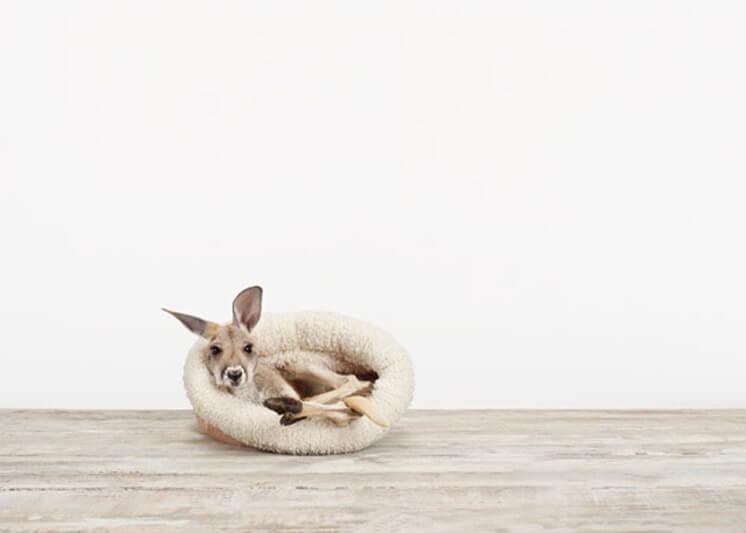 Animal Print Shop 05 © Sharon Montrose | Est Magazine