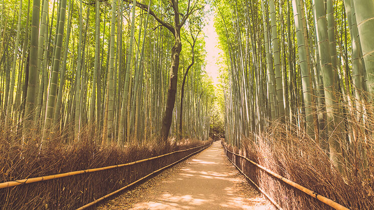 sagano bamboo forest japan city guide est magazine