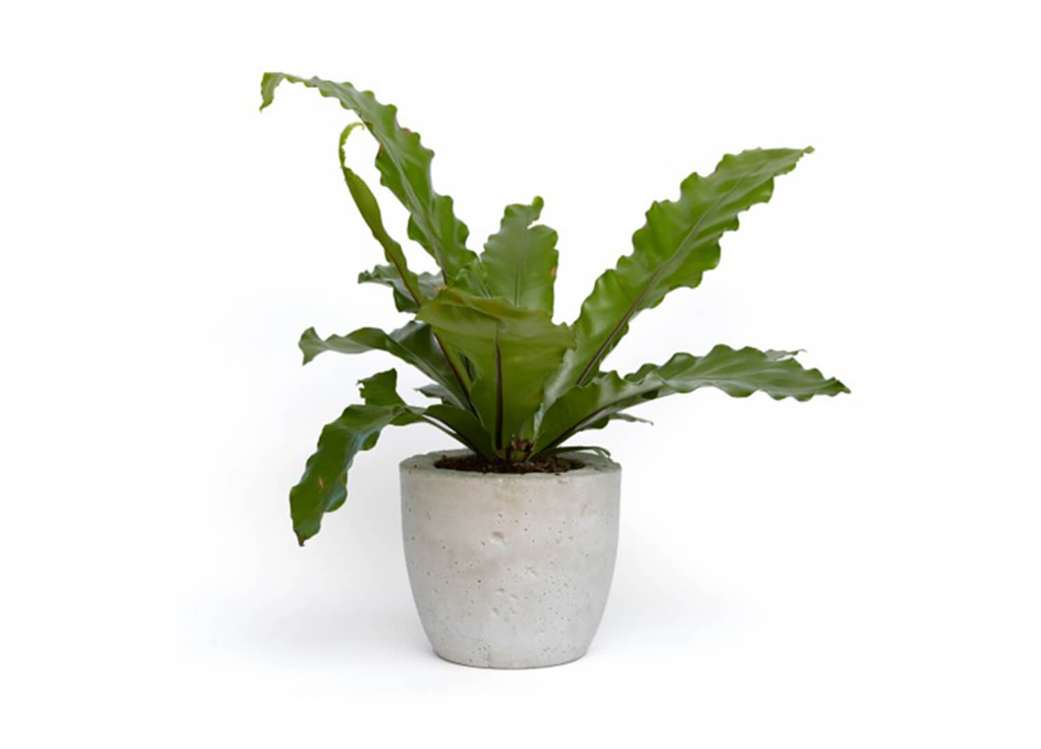 est-living-elsternwick-house-potted-plant