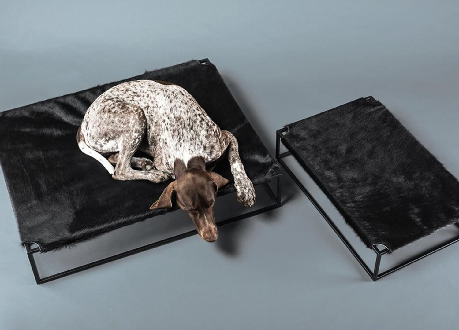 Designer dog beds est living for Designer directory