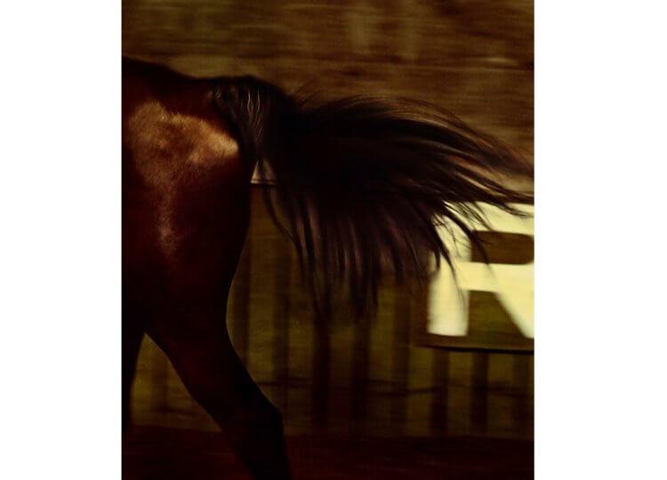Trevor Mein - Susan Knight Otomys