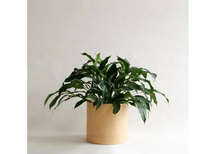 Flor Planter Plyroom